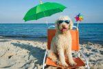 Vieste - Ordinanza del Sindaco (su Regolamento regionale), cani in spiaggia solo nei lidi e al guinzaglio