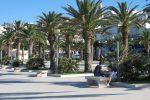 Vieste - Abbattimento palme infette, appalto comunale