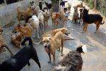 Vieste - Cani vaganti: giro di vite del Comune, istituita task force per controlli su tutto il territorio